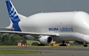banner beluga